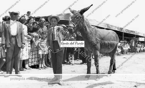 feriaganado_1960_puertosantamaria