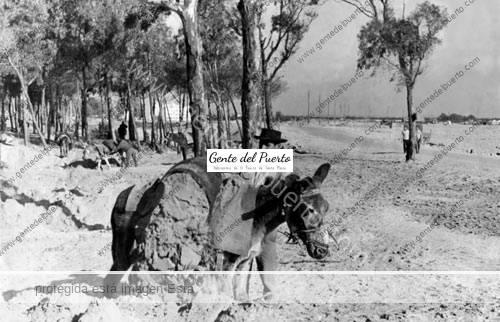 burro_arriero_puertosantamaria