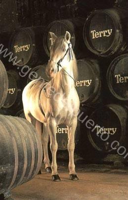 caballobodega_terry_puertosantamaria