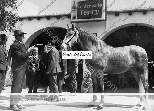 caballo_terry_puertosantamaria