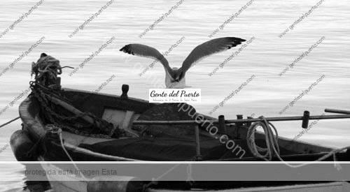 gaviotas3_puertosantamaria
