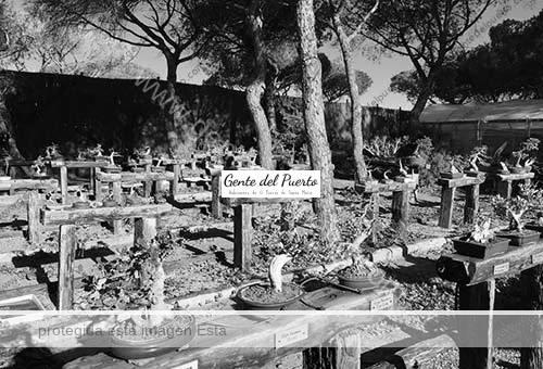 jardindelbonsai1_puertosantamaria