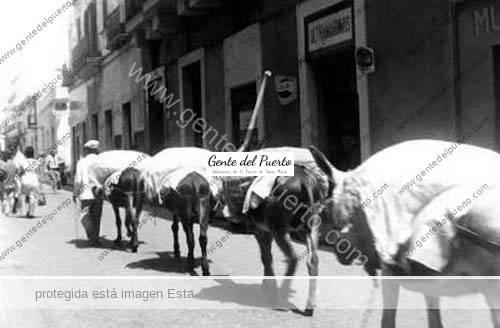 ariero-y-burros-por-ganado-puertosantamaria