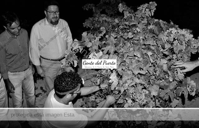 2.352. Rodrigo Sánchez Haro. El Consejero de Agricultura de la Junta, de vendimia nocturna en El Puerto.