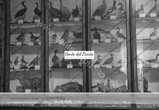 4.781. El Museo de Ciencias de San Luis Gonzaga. Un tributo a la naturaleza desconocido (y II)